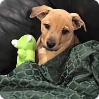 Adopt A Pet :: Keiko - Wedgefield, SC