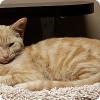 Adopt A Pet :: Dean - Troy, MI