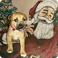 Adopt A Pet :: Hawthorn - Orlando, FL
