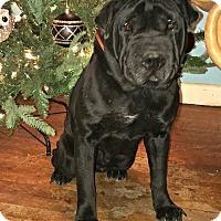 Adopt A Pet :: Maggie - Starkville, MS