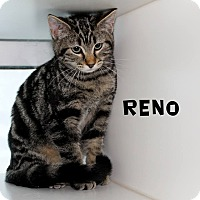 Adopt A Pet :: Reno - Edgewood, NM