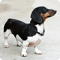 Adopt A Pet :: Bernard - San Diego, CA