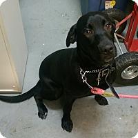Adopt A Pet :: Luna - Ogden, UT