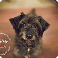Adopt A Pet :: SNUGGS - Lucknow, ON