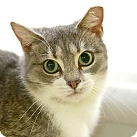 Adopt A Pet :: Milky Way - Kettering, OH