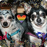 Adopt A Pet :: Fred and Ethel - Brazil, IN