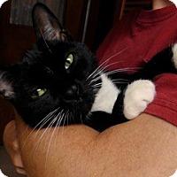 Adopt A Pet :: Sasha #2 - Troy, OH