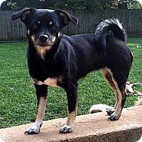 Adopt A Pet :: TIBA - Smyrna, GA