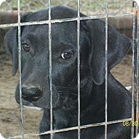 Adopt A Pet :: Bach - Mexia, TX