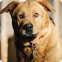 Adopt A Pet :: Sir Charles - Portland, OR