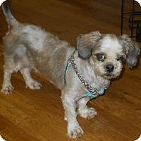 Adopt A Pet :: Shadow - dewey, AZ