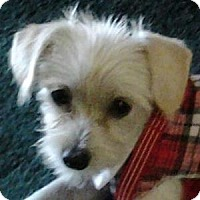Adopt A Pet :: Cassie - La Costa, CA
