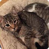 Adopt A Pet :: Betsy - East Hanover, NJ