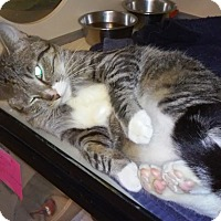 Adopt A Pet :: Hazel - Franklin, NH
