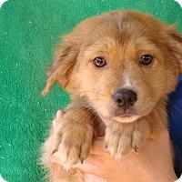 Adopt A Pet :: Kisska - Oviedo, FL