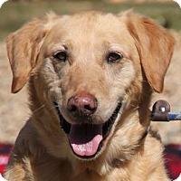Adopt A Pet :: Gretel - Lovingston, VA
