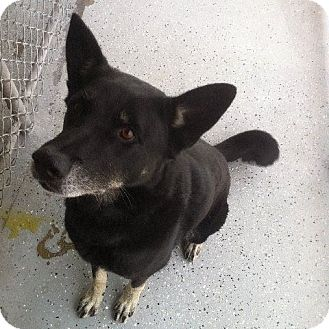 German Shepherd Dog Mix Dog for adoption in San Diego, California - Magic