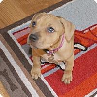 Adopt A Pet :: Faye - Framingham, MA