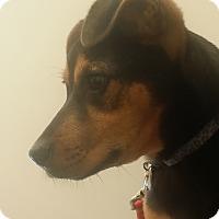 Adopt A Pet :: Candace - Alpharetta, GA
