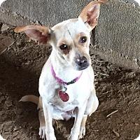 Adopt A Pet :: Lucille - Powder Springs, GA