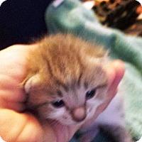 Adopt A Pet :: Ares - Putnam, CT