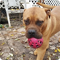 Adopt A Pet :: Hooch - ADOPTION PENDING!! - Antioch, IL