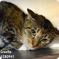 Adopt A Pet :: CRUELLA - Conroe, TX
