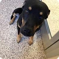 Adopt A Pet :: Rudy - Aiken, SC