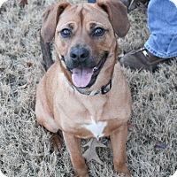 Adopt A Pet :: Kenzie - McDonough, GA