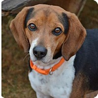 Adopt A Pet :: Archie - Winder, GA
