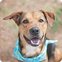 Adopt A Pet :: Ajax - Kingwood, TX