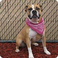 Adopt A Pet :: CINNAMON - Norco, CA