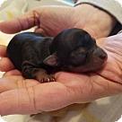 Adopt A Pet :: Prince Eric