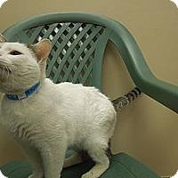 Adopt A Pet :: Tommy - Medina, OH