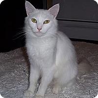 Adopt A Pet :: Snowball and Snowflake - Davis, CA