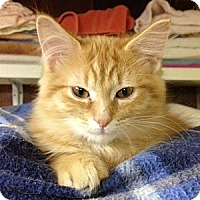 Adopt A Pet :: Pumpkin - Byron Center, MI