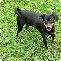Adopt A Pet :: Noah - Godfrey, IL