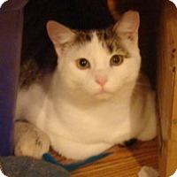 Adopt A Pet :: Jed - Muncie, IN