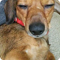 Adopt A Pet :: Emma - Phoenix, AZ