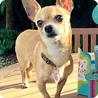 Adopt A Pet :: Nacho - Ft. Lauderdale, FL