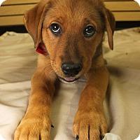 Adopt A Pet :: Vega - Detroit, MI
