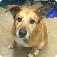 Adopt A Pet :: Mia-GENTLE SENIOR - Oak Ridge, NJ
