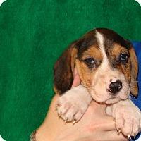 Adopt A Pet :: Dali - Oviedo, FL