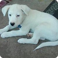 Adopt A Pet :: Milo  ADOPTED - Tulsa, OK