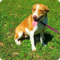 Adopt A Pet :: Sophie - N - Huntington, NY