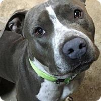 Adopt A Pet :: Splash - Kansas City, MO