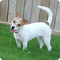 Adopt A Pet :: CeCe in San Antonio - San Antonio, TX