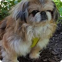 Adopt A Pet :: Tripp - Fennville, MI