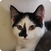 Adopt A Pet :: Emma & Maddie - Richmond, VA