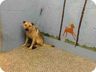 German Shepherd Dog Mix Dog for adoption in San Bernardino, California - URGENT on 12/1 SAN BERNARDINO